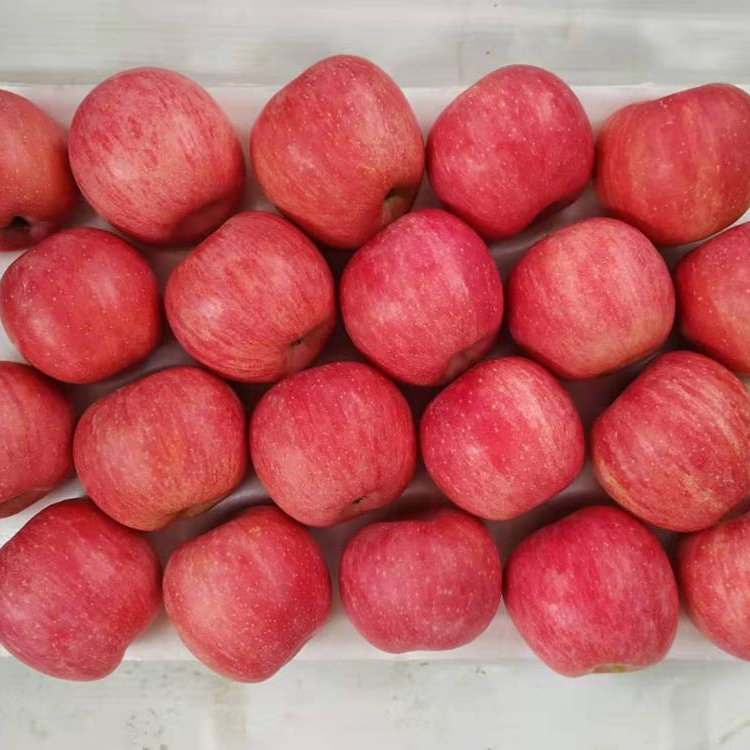 Chinese fuji <strong>apples</strong> red fuji crispy red fresh <strong>apple</strong>