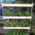 vertical grow tower hydroponic pvc pipe for lettuce