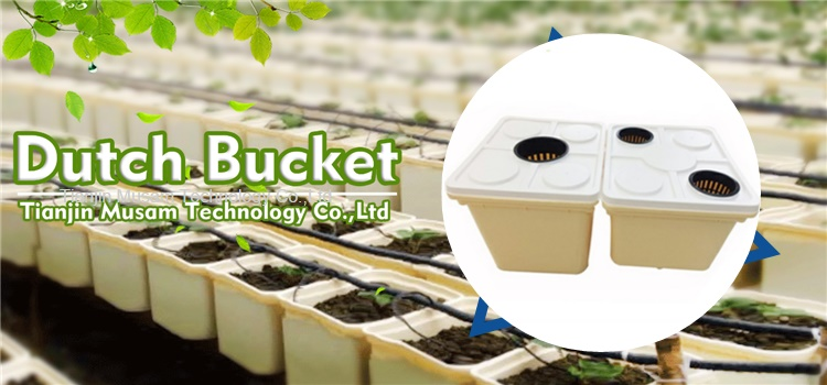Dutch Bucket For Hydroponic Tomato Growing
