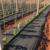 PP anti-UV landscape PP weed block grass prevent fabric