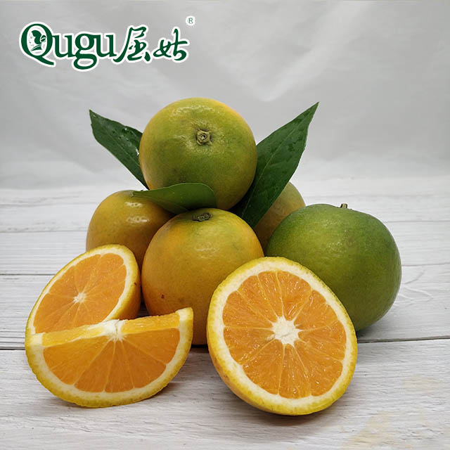 Fresh citrus fruit <strong>orange</strong> Summer Valencia <strong>oranges</strong> navel <strong>oranges</strong> sweet and new crop