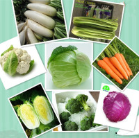 chinese fresh mixed vegetable (chinese cabbage white radish celery broccoli) )direct manufacture