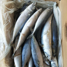 Fish Frozen Style Pacific Mackerel Food