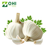 /product-detail/good-quality-3-50-allicin-powder-lipid-garlic-extract-pure-natural-garlic-extract-allicin-powder-62085000450.html