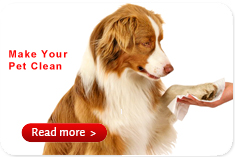Super September Purchasing Antibacterial Pet Wipes