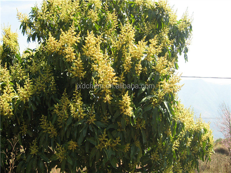 Mango tree used good quality 25% SC Paclobutrazol