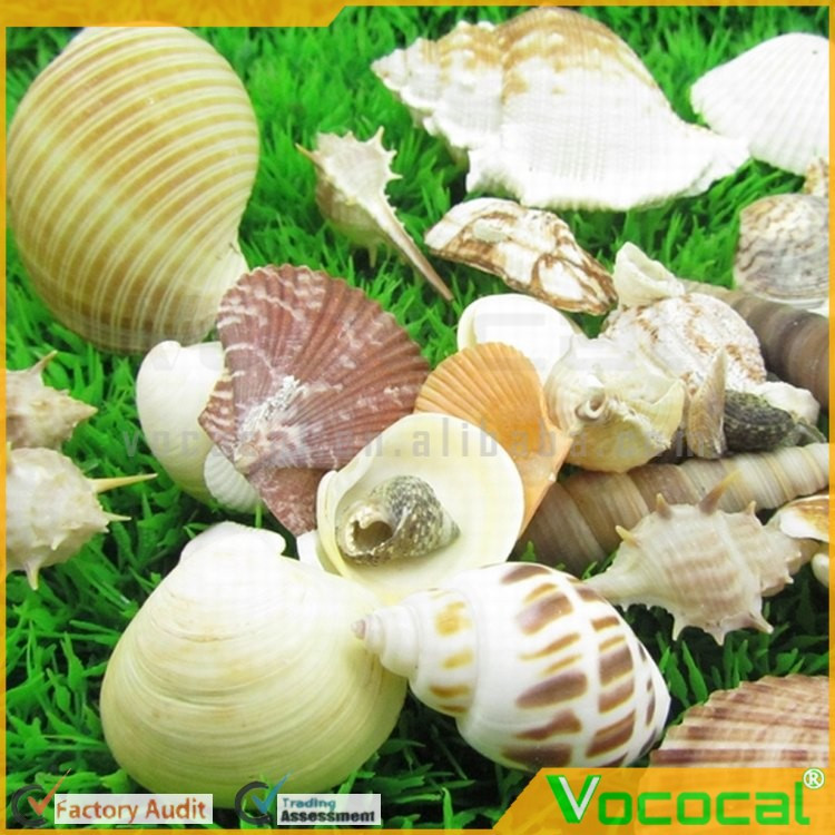 200g Nature Aquarium Fish Tank Sea Shell Beach Seashells Conch Sea Snail Kit Decoration Ornament Accessories Mixed Style