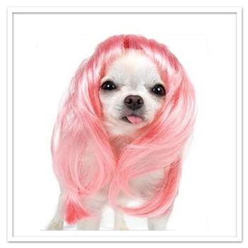 2014 new production afric dog wig,pet dog wig,