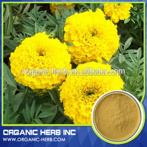 Marigold Flower Extract / Organic marigold extract lutein herbal extract