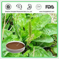 Top Sale Asiatic Plantain Powder Extract