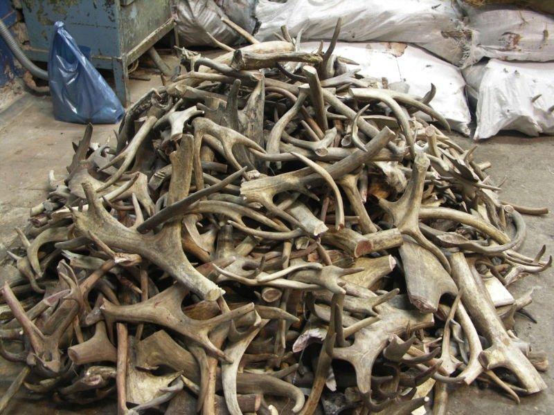 Corna di cervo anti invecchiamento id prodotto 110691460 for Corna cervo