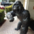 Indoor decorative Life Size Bronze Gorilla Statue