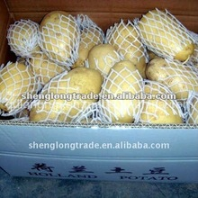 fresh potato With best price in china