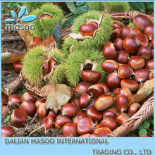 New Crop Chestnuts From Dandong !