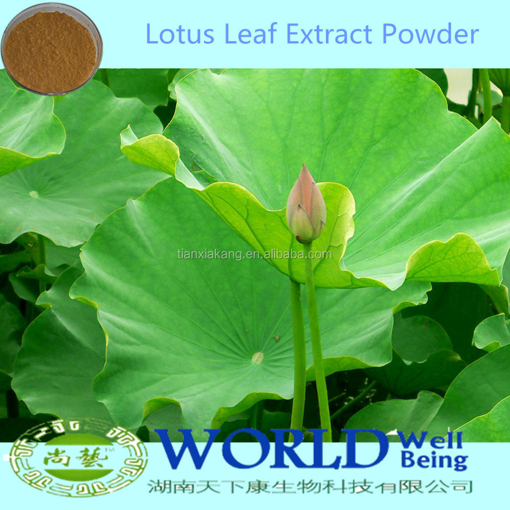 100% Natural Plant Lotus Leaf Extract Powder Nuciferine Lotus Leaf Extract Lose Weight Lotus Powder