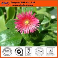 Sells andrographis paniculata(burm.f.)nees. andrographis paniculata plant