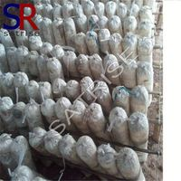 Cultivating fresh suitable price shiitake mushroom spawn substrate