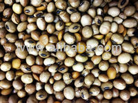Soybeans in bulk direct from the farm