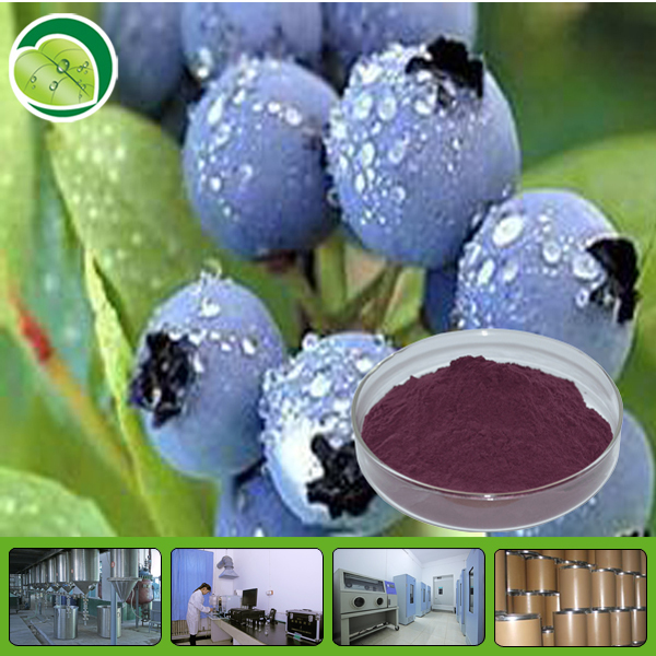 100% natural fruit fresh bilberry powder anthocyanidins 25%