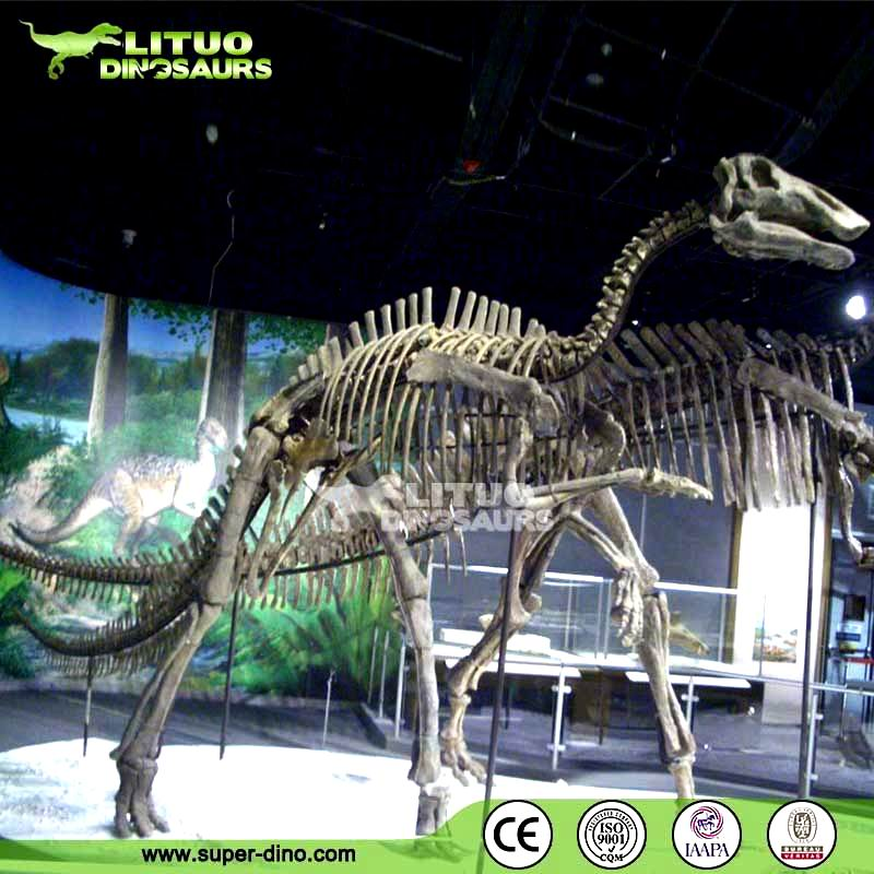 Animated Dinosaur Skeleton