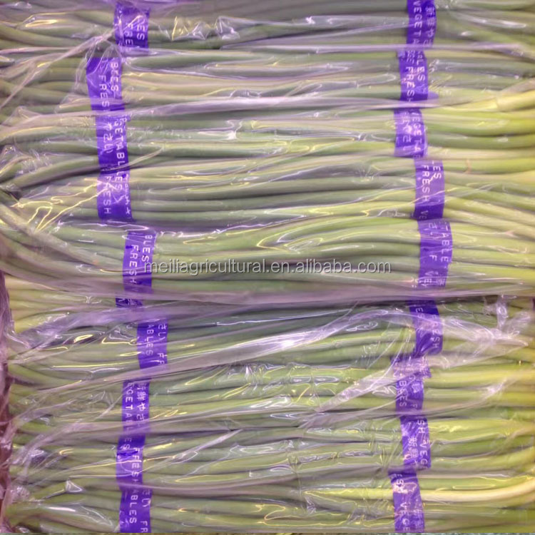 high quality fresh vegetable garlic bolt/garlic sprout