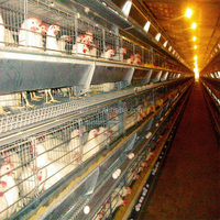 Automatic h type chicken layer cage 2016