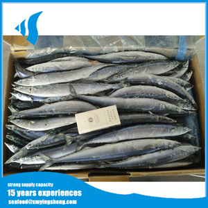 Marine fish fresh fish frozen pacific saury with high fat content