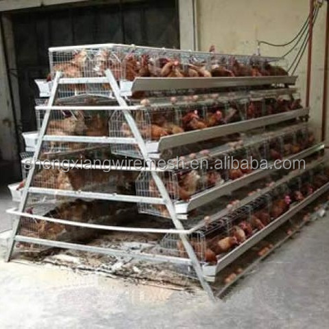 3 Layers poultry cages /chicken cage /layer cage hot galvanized 20 years lifetime chicken battery cage with Auto water system
