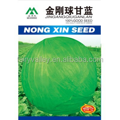 High Quality Chinese Hybrid Cabbage Seeds For Growing-King Kong Ball