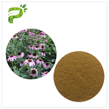 Natural Plant Extract Powder Anti-fungal Echinacea Purpurea Herb Extract
