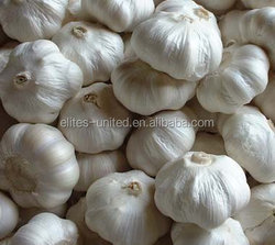 New crop fresh garlic price