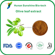 Hot product Olive Leaf Extract Powder 10%-60% Oleuropein