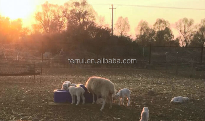 Automatic animal drinking water for livestock/sheep/goat/horse/cow/cattle