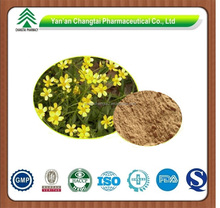 GMP factory supply herb organic Ranunculus ternatus thunb P.E.