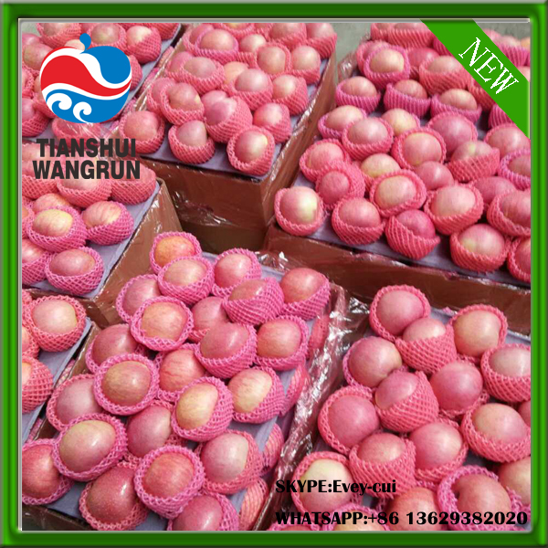 red qinguan apple chinese qinguan apple price red color qinguan apple