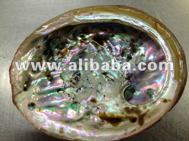 Abalone Shell from Australian black and green lip
