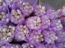 Chinese 2016 Fresh Garlic Price Purple/Red/Pure White Garlic