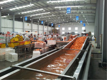 Root Vegetable/Carrot/Potato Washing Production line/Washing/Cleaning/Sorting