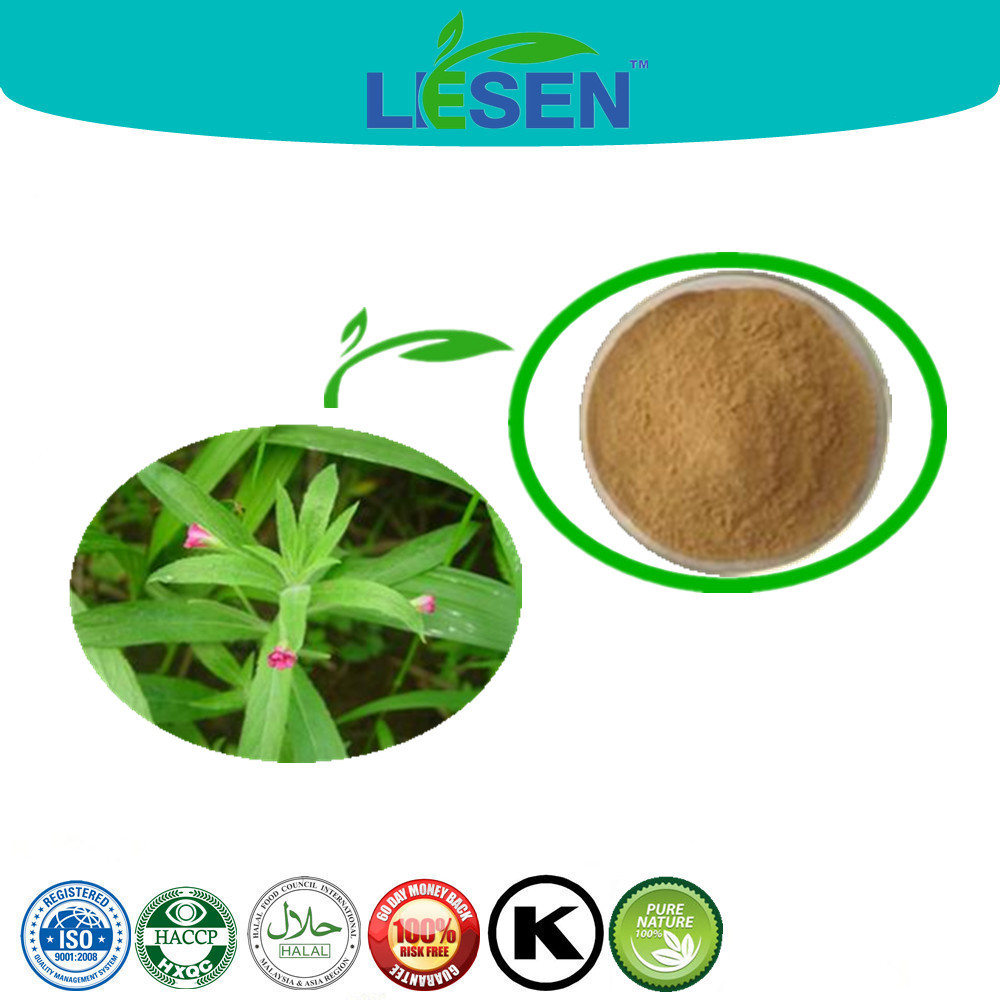 2015 New Arrival Epilobium Angustifolium Extract / Willow Herb Extract Powder / Fireweed Extract