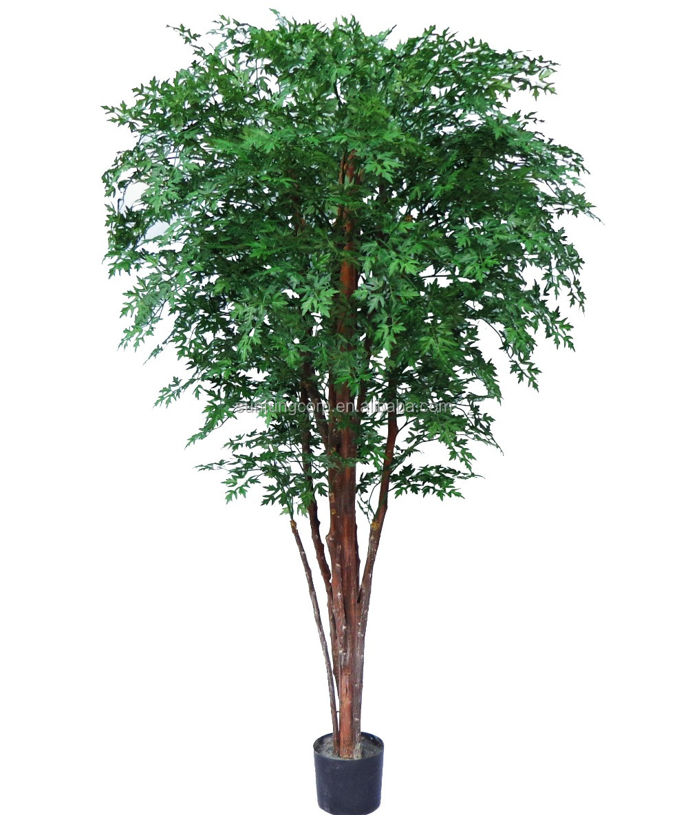 72'' Twotone green Ming Aralia Tree