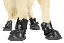 factory directly leisure boots skidproof dog walking shoes