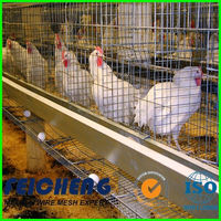 Chicken Farm Layer Cages For Sale