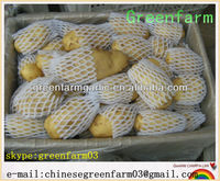 competitive price 2013 fresh holland potatoes in china