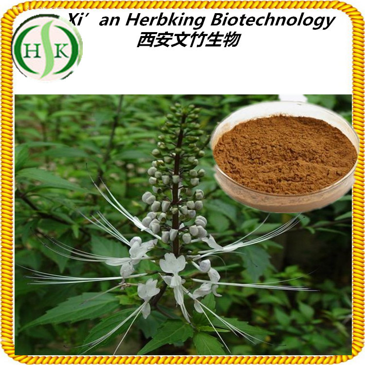 2.5% 8.0% Triterpene Glycosides GMP Factory Supply Black Cohosh Extract