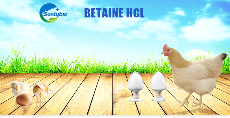 Feed Grade Vitamins Poultry feed grade feed additive betaine hcl