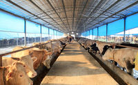 steel structure cattle shed