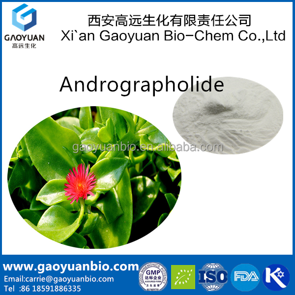 gaoyuan supply health care product High quality andrographis paniculata extract powder with free sample and low price