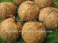 Coconut Price for Singapore Market