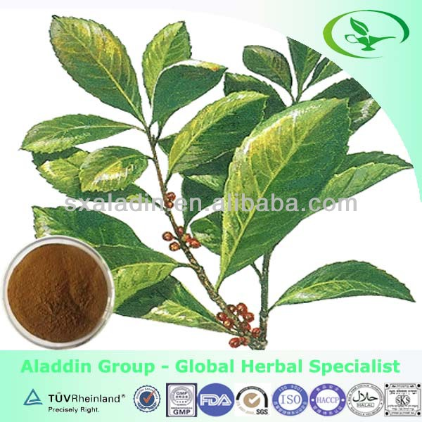 100% Nature Paraguay Tea Extract