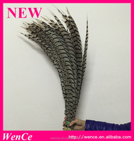 bulk sale lady zebra pheasant feathers for carnival decoration